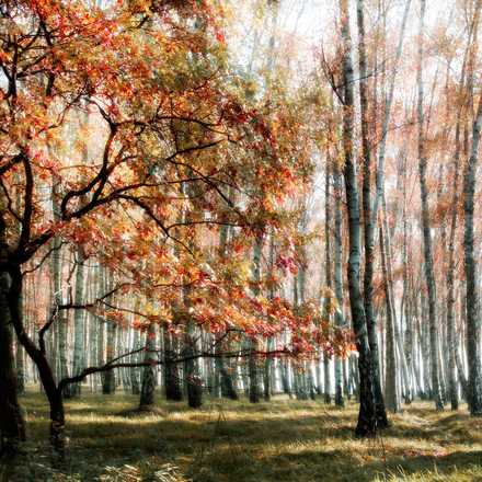 The Wood Colours - Christiane Steinicke