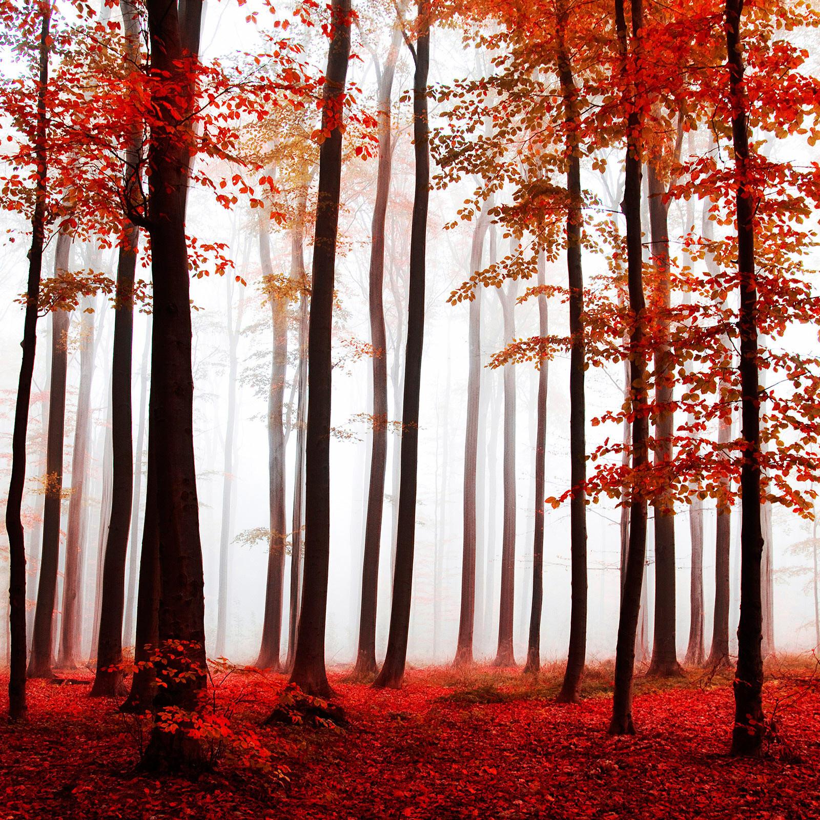 Purple Trees - Christiane Steinicke