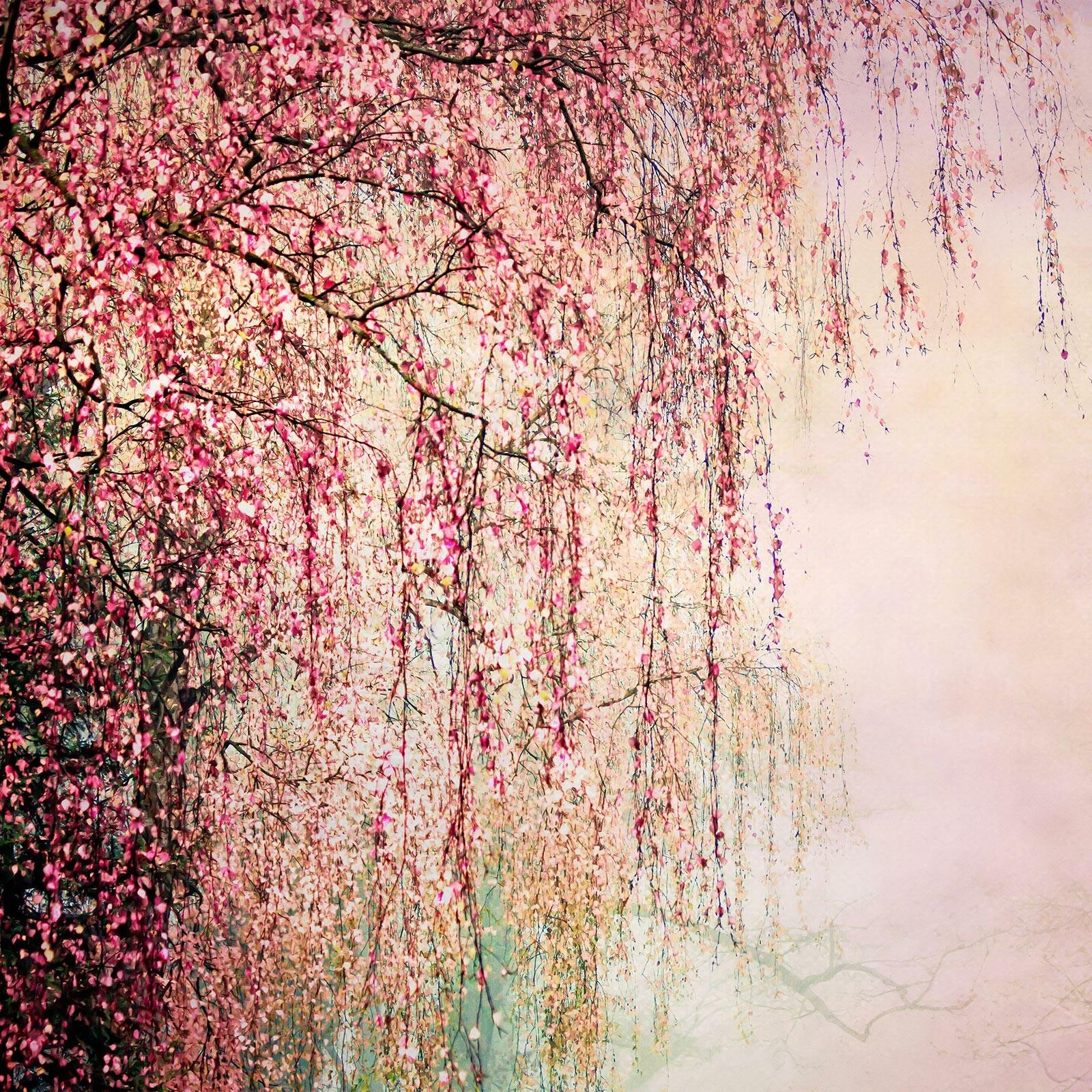 Mystic Forest - Christiane Steinicke