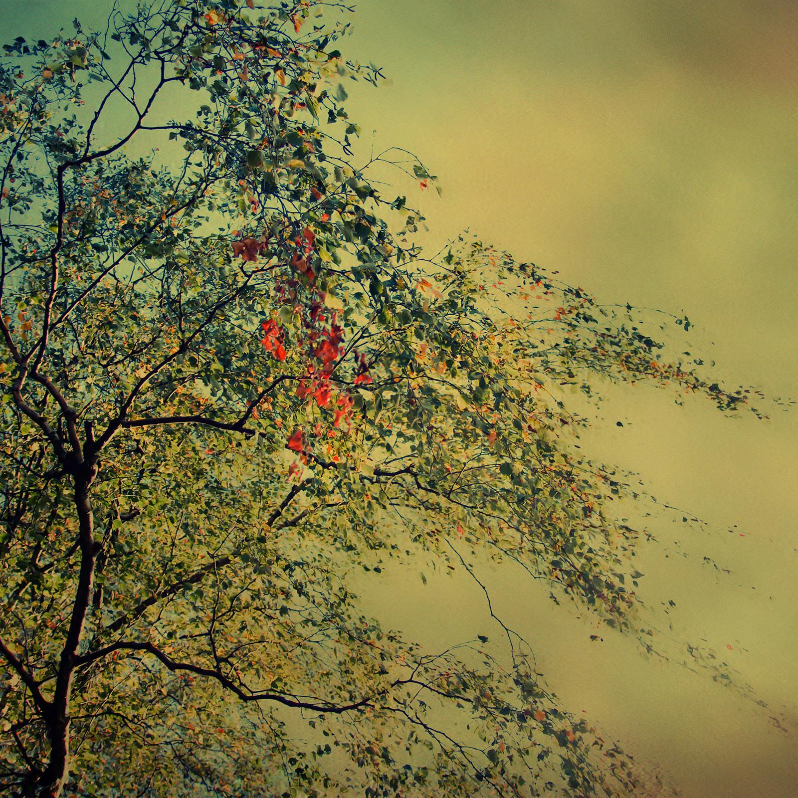 The Autumnal Whisper - Christiane Steinicke