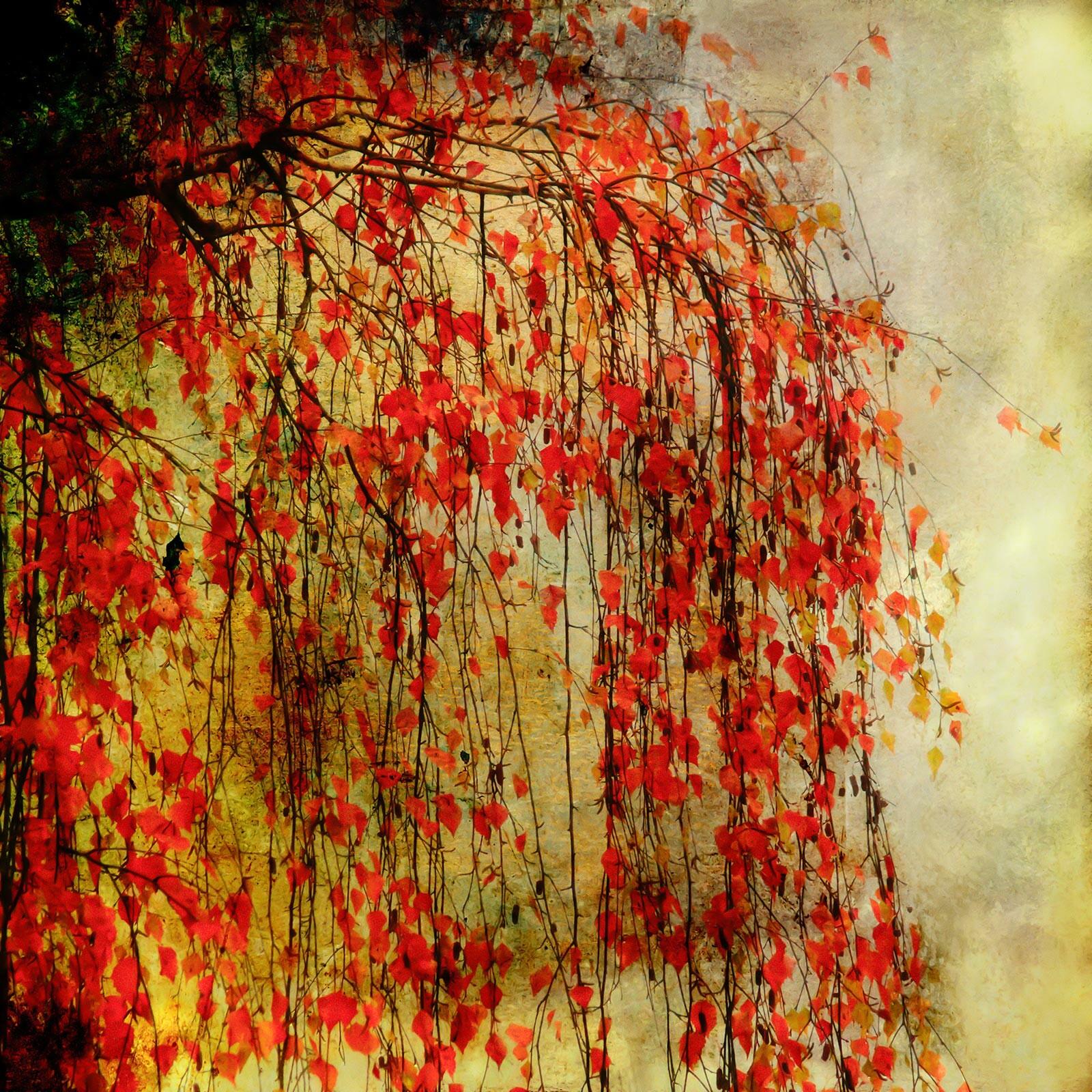 Tree on Fire - Christiane Steinicke