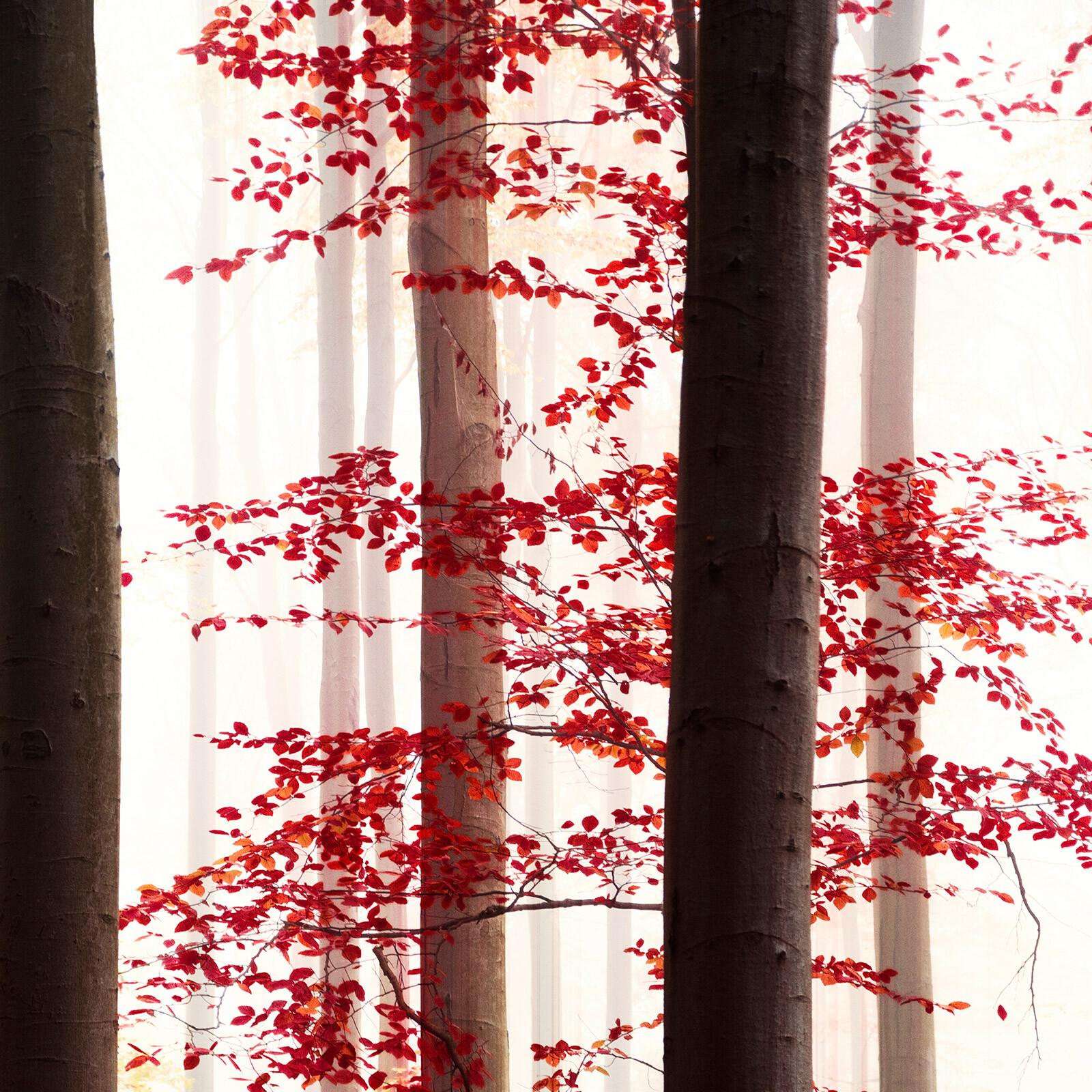 Autumn Magic - Christiane Steinicke