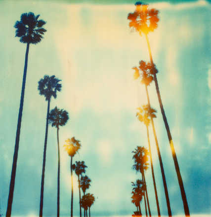Palm Trees on Wilcox - Stefanie Schneider