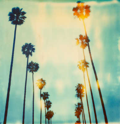 Palm Trees on Wilcox by Stefanie Schneider