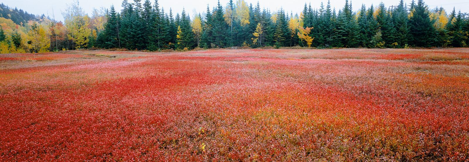 Autumn, New Brunswick, Canada - Axel M. Mosler