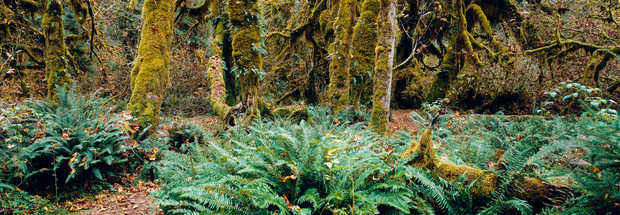 Rain Forest, Pacific Rim, Vancouver Island, British Columbia, Canada - Axel M. Mosler