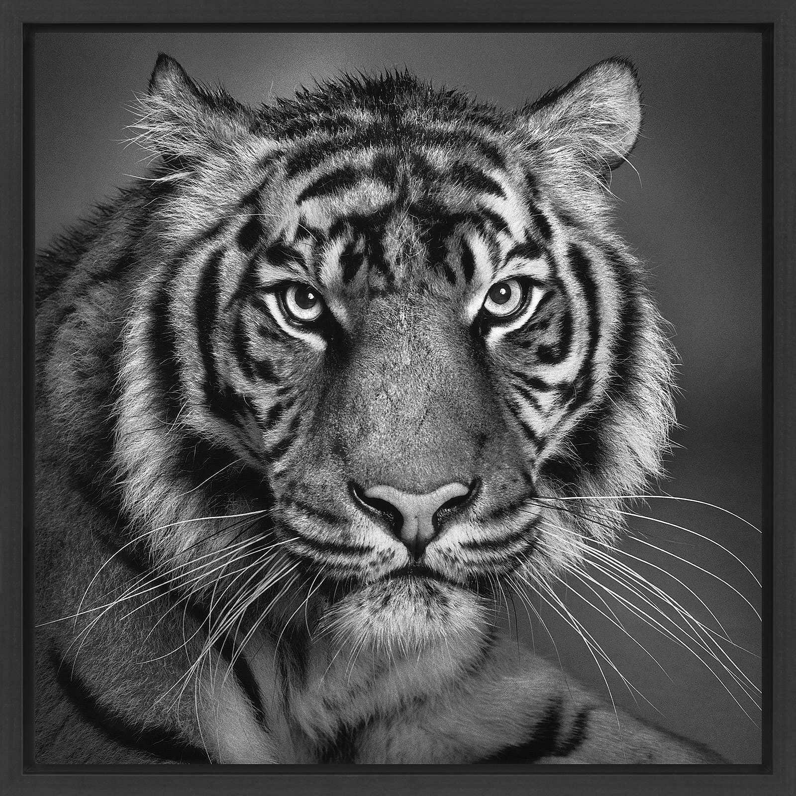 Selection - Animal Stars - Alexander Von Reiswitz