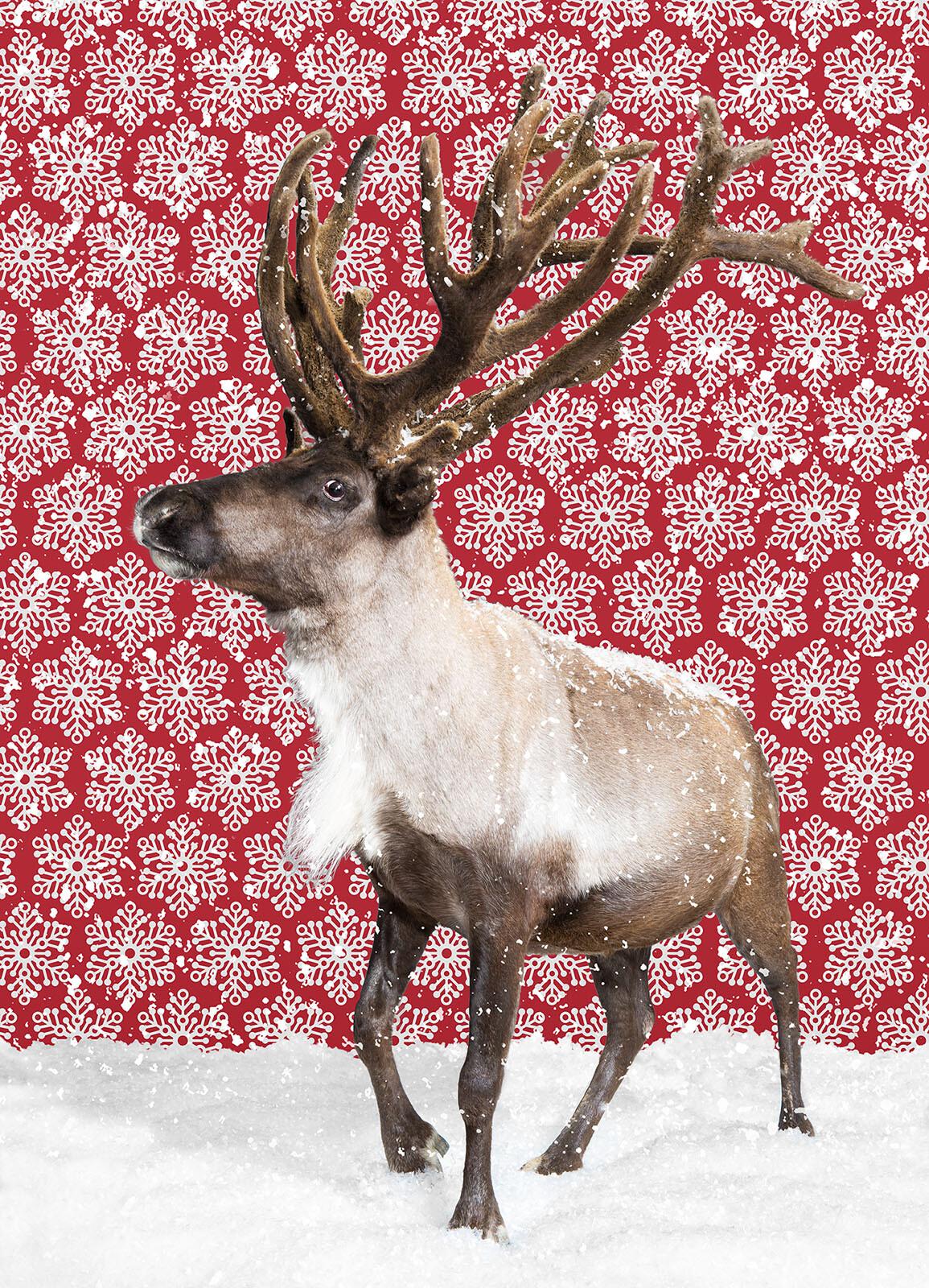 Reindeer - Catherine Ledner