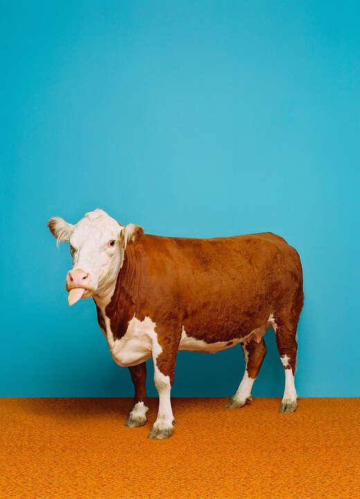 Cow 1 von Catherine Ledner