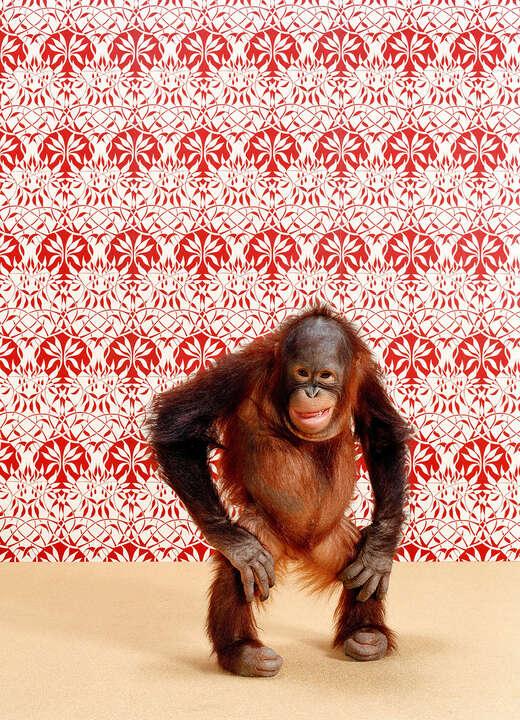 Orangutan 6 von Catherine Ledner