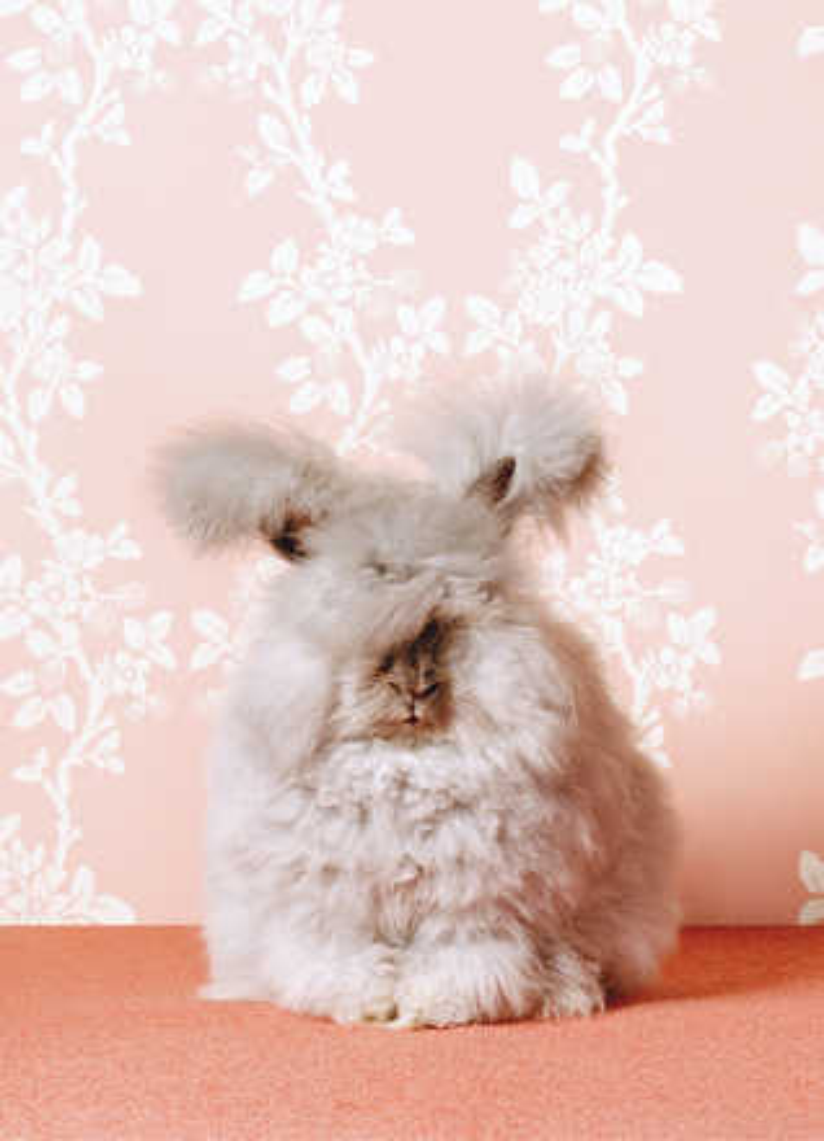 Fluffy Bunny - Catherine Ledner