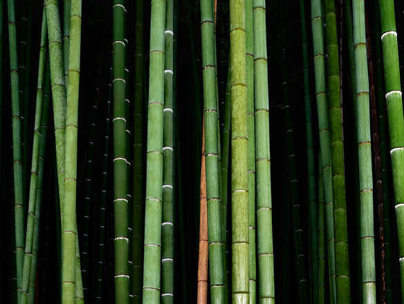 Bamboo II - André Wagner