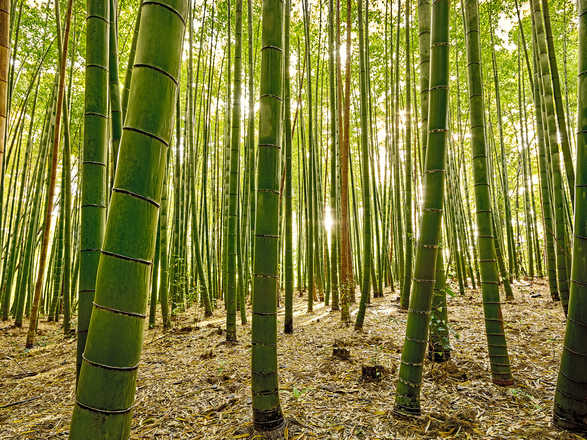 Bamboo IV - André Wagner