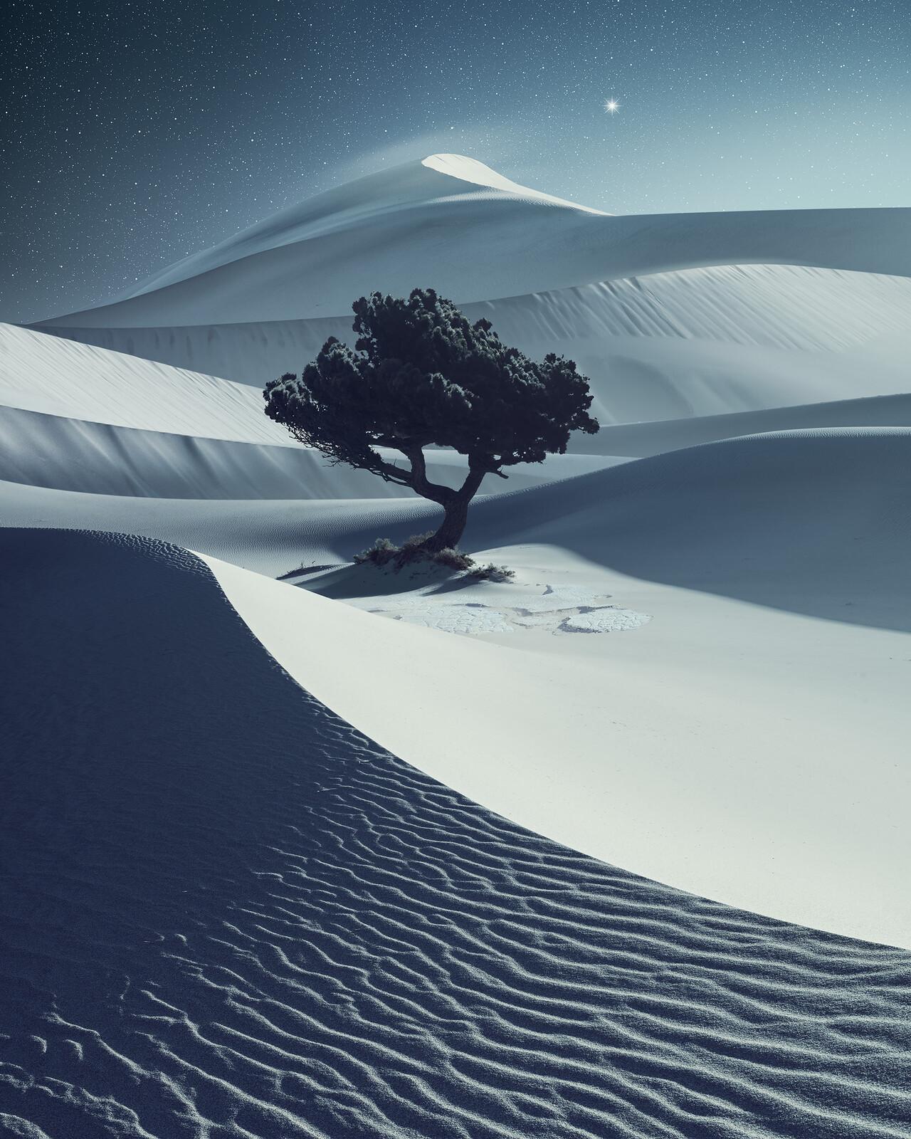 Desertnight - Benjamin Everett