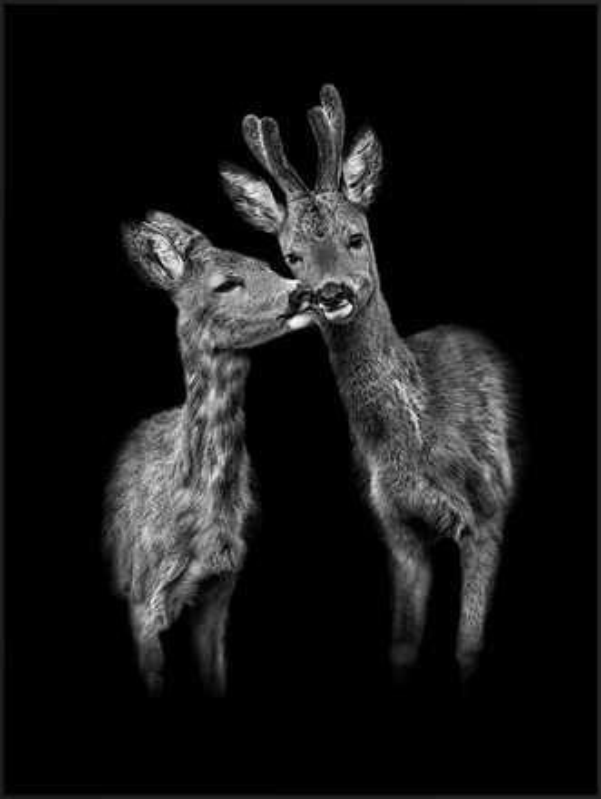 Der Kuss - Claudio Gotsch