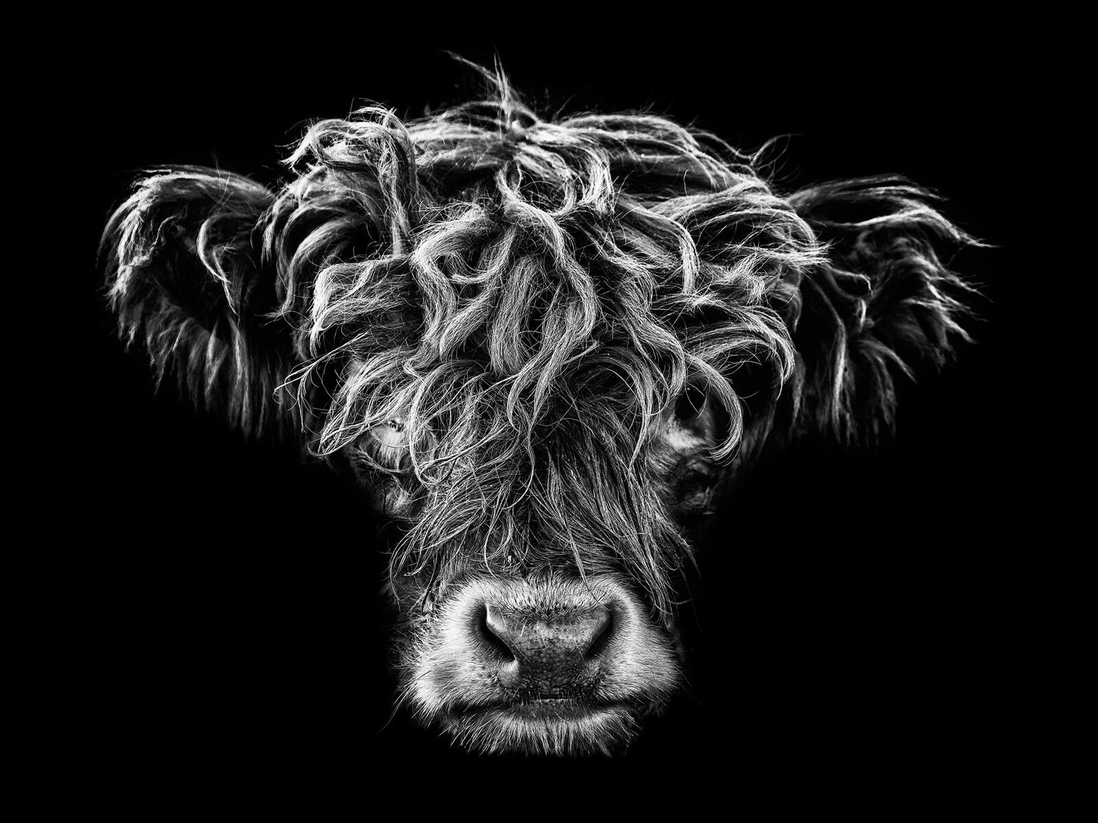 Highlander II - Claudio Gotsch