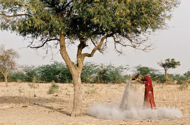 ashes under Khejeri tree, Rajasthan - Christopher Pillitz