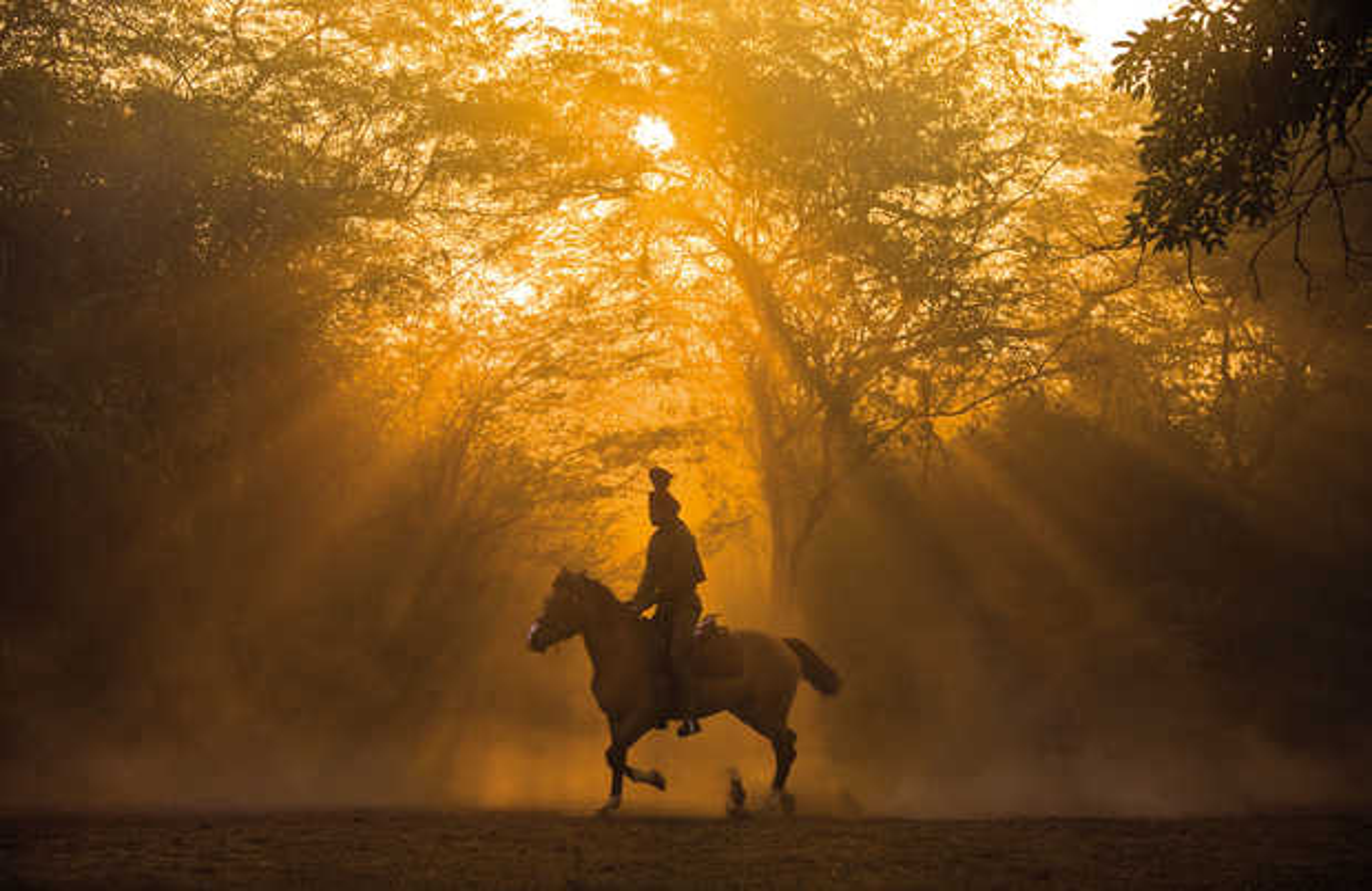 horse training in New Delhi - Christopher Pillitz