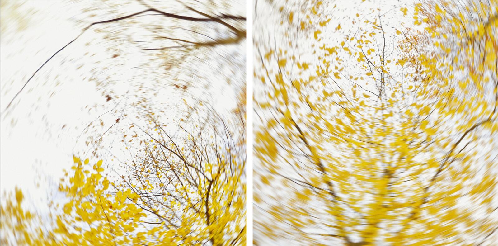 pieces of autumn II - Carolin Wolf