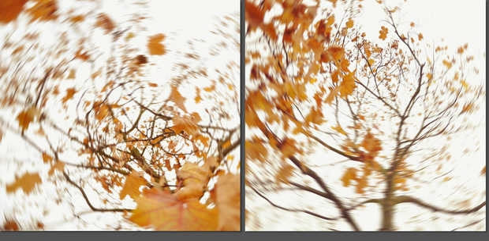 pieces of autumn IX - Carolin Wolf