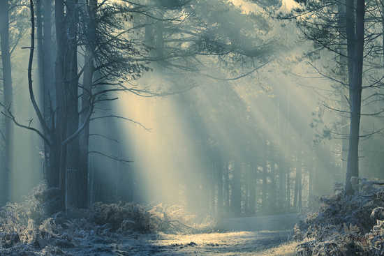 Forest Light