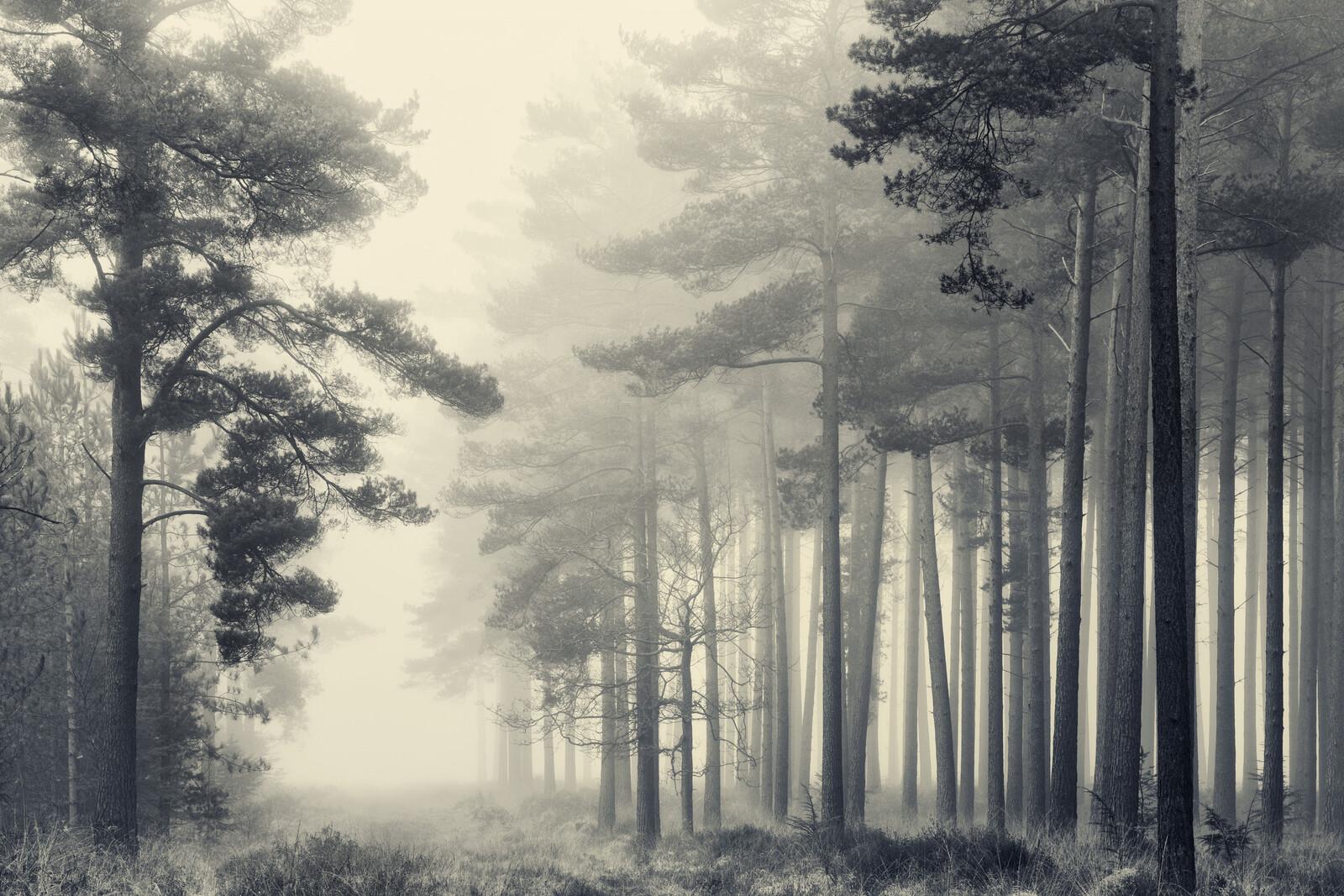 March Trees - David Baker