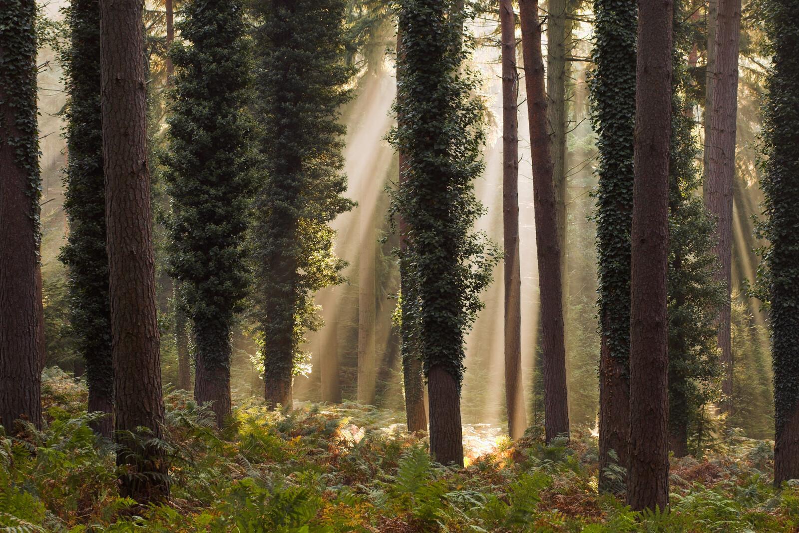New Forest Trees - David Baker
