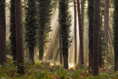 New Forest Trees by David Baker