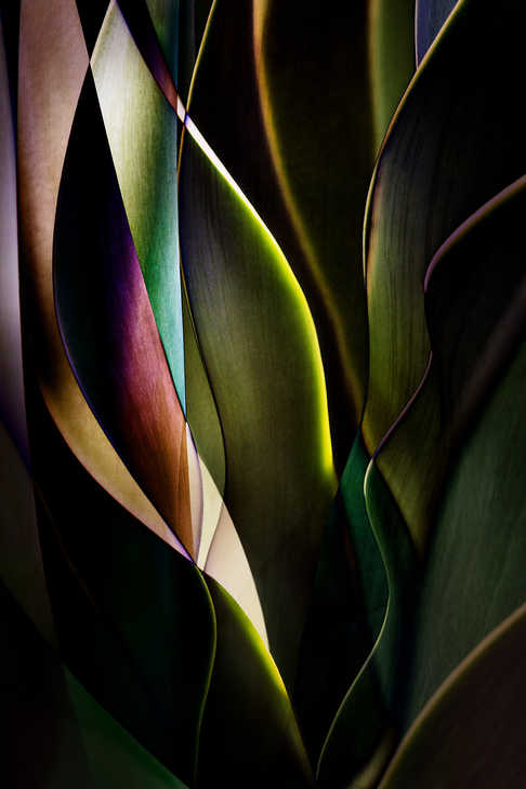 Cactus Abstraction 04 von Ed Freeman
