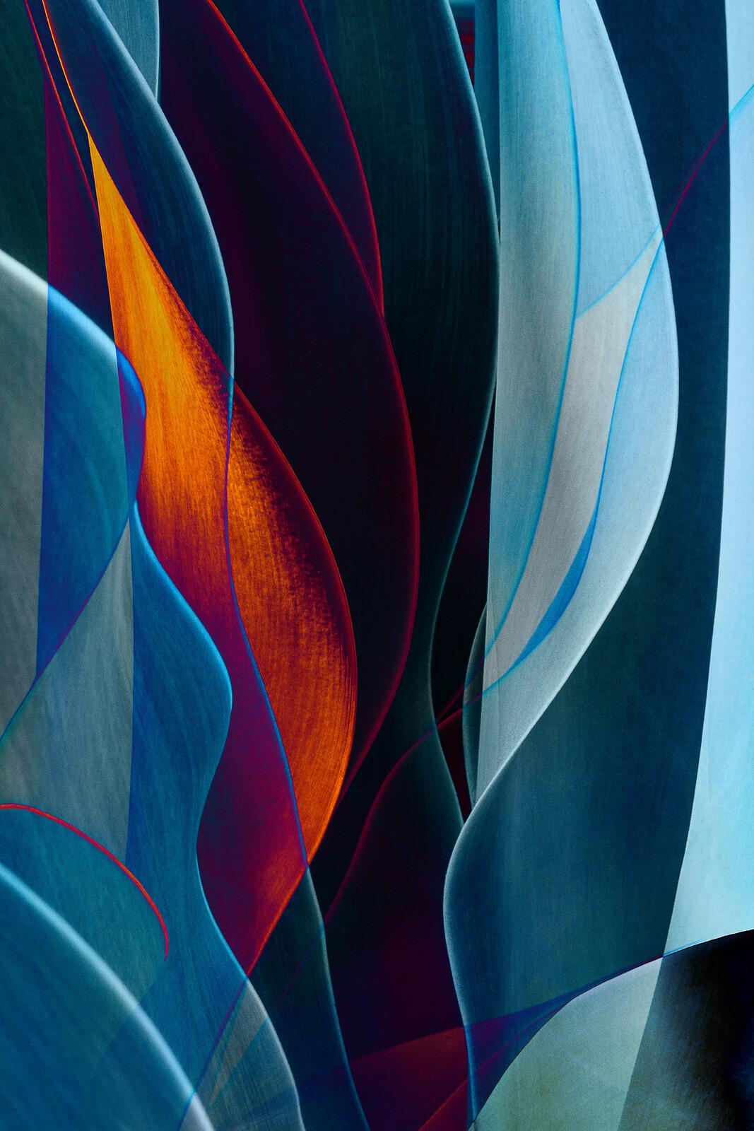 Cactus Abstraction 08 - Ed Freeman