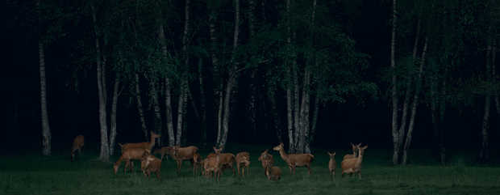 Pride of Deer #1 - Frank Stoeckel
