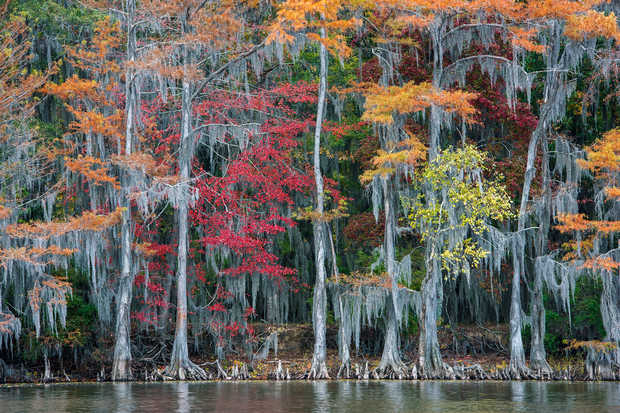 The Big Cypress Bayou - Georg Popp