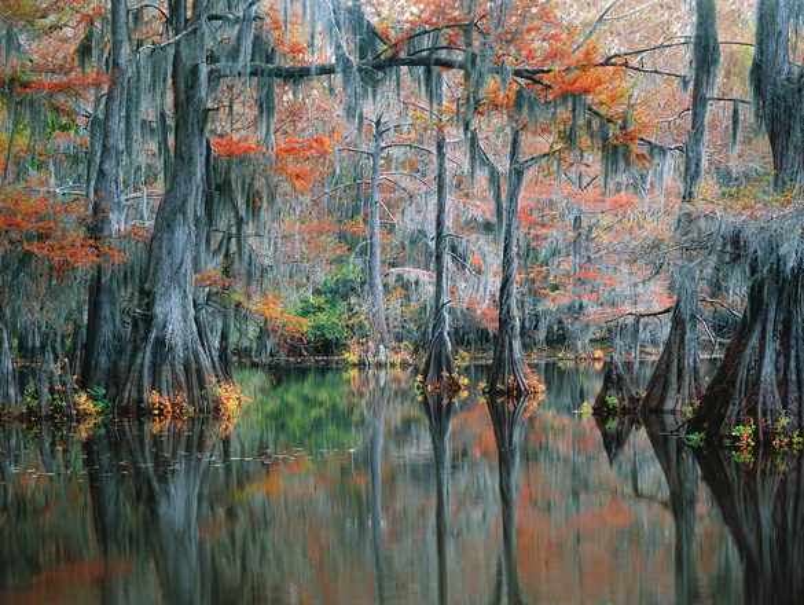 The Secret Cypress Swamp - Georg Popp
