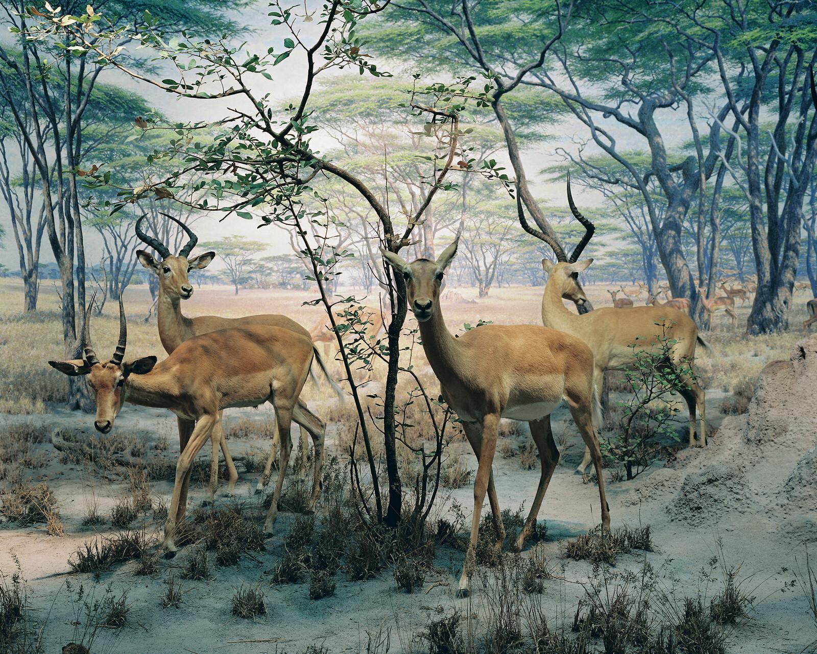 Diorama #8 - Henning Bock