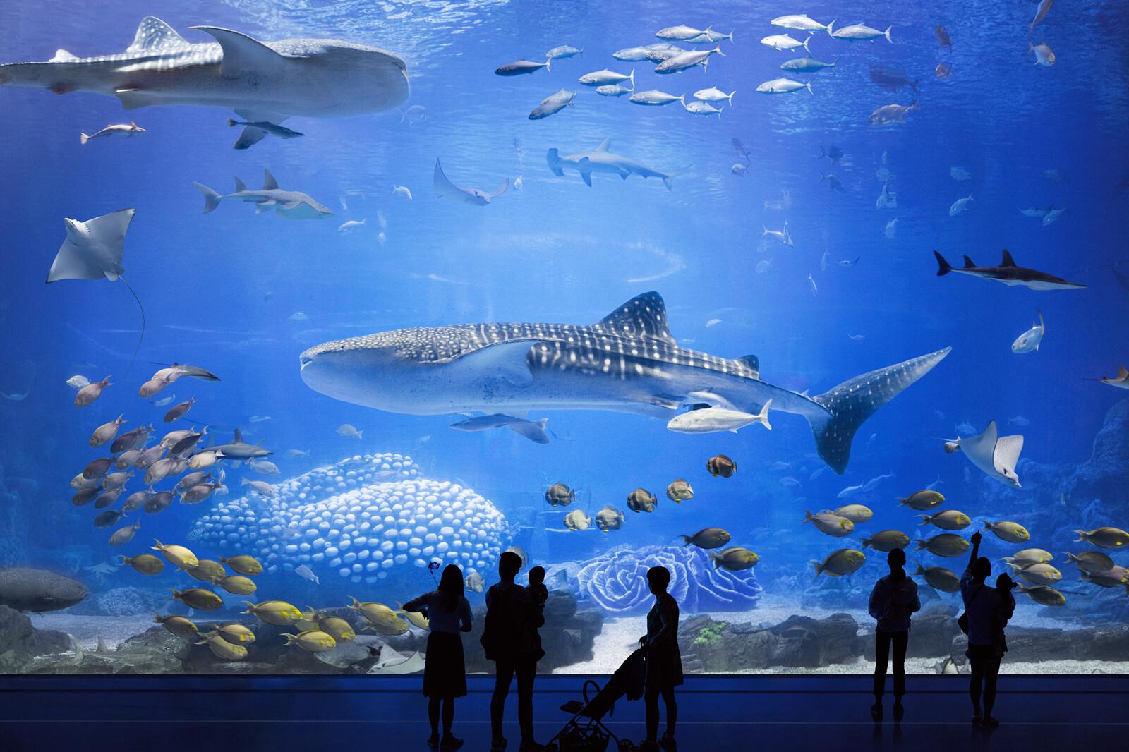 Ocean Beauty I - Hiepler & Brunier