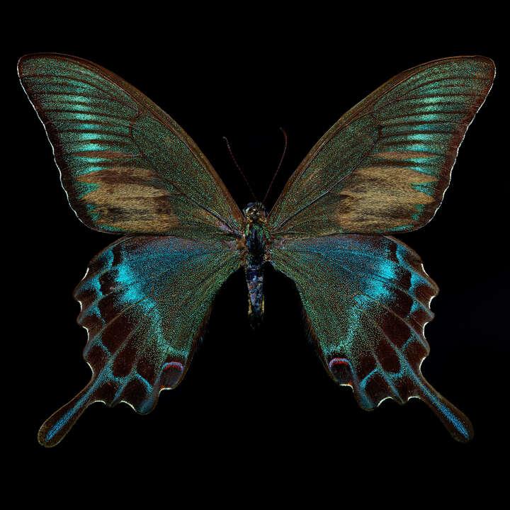 Butterfly  von Heiko Hellwig