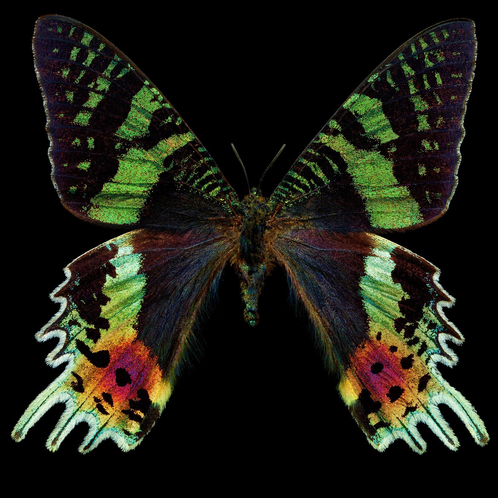 Butterfly II - Heiko Hellwig