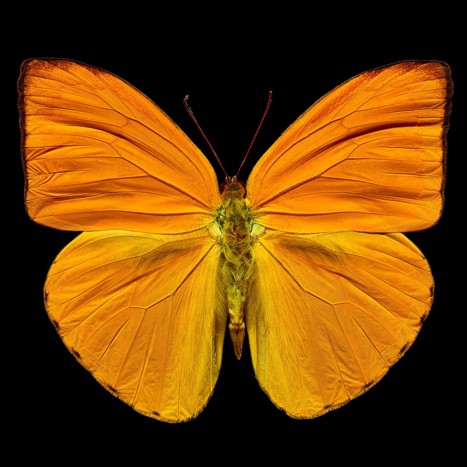 Butterfly IV - Heiko Hellwig
