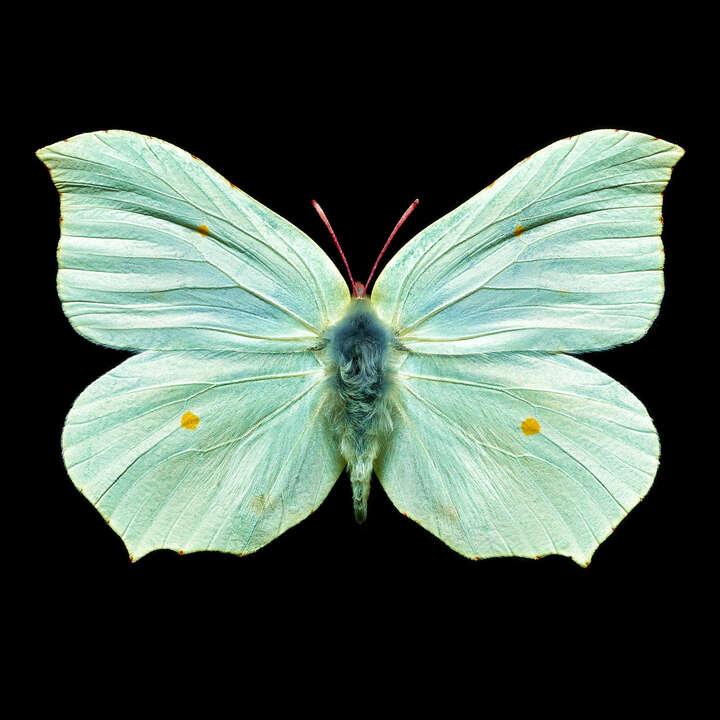 Butterfly V von Heiko Hellwig