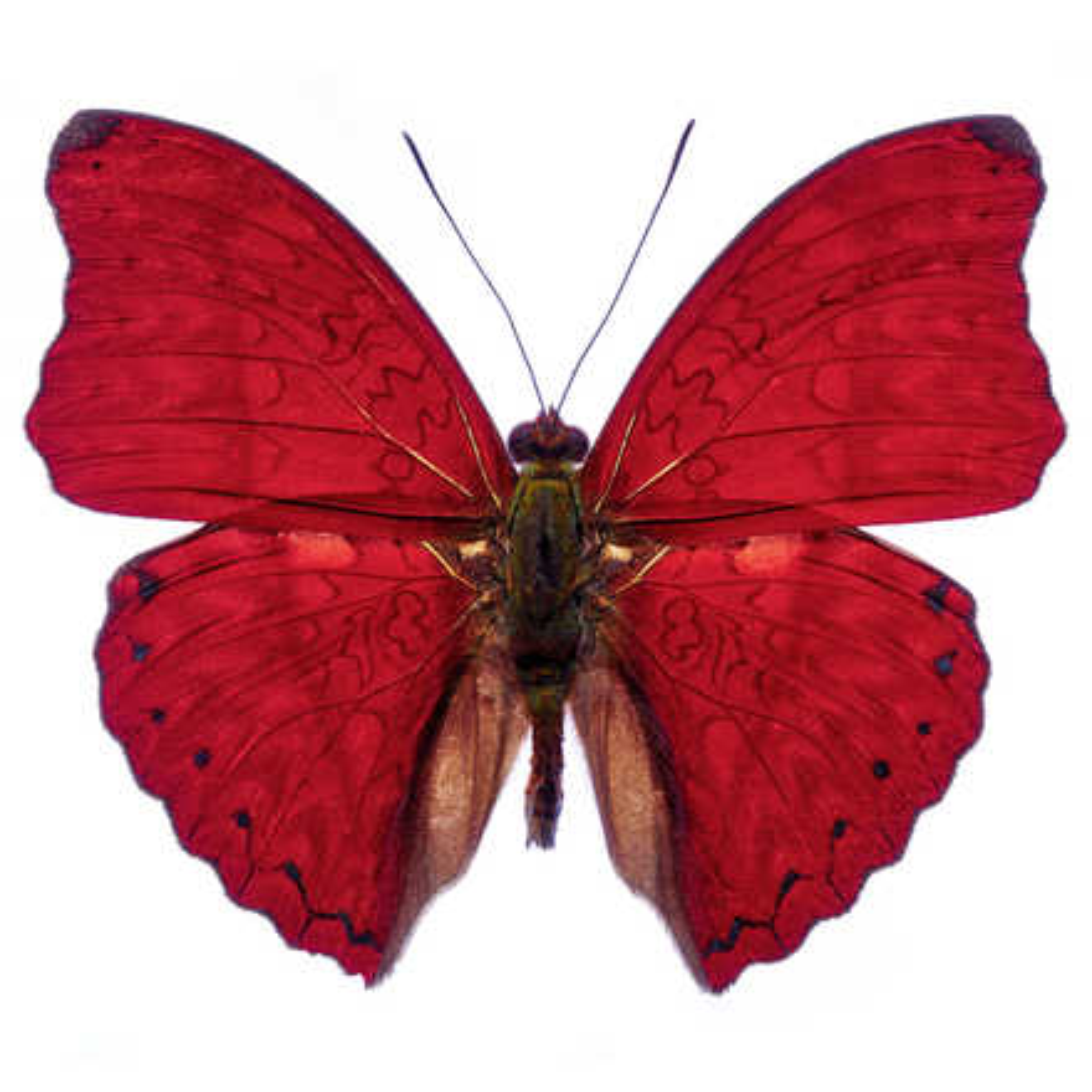 Butterfly VII - Heiko Hellwig