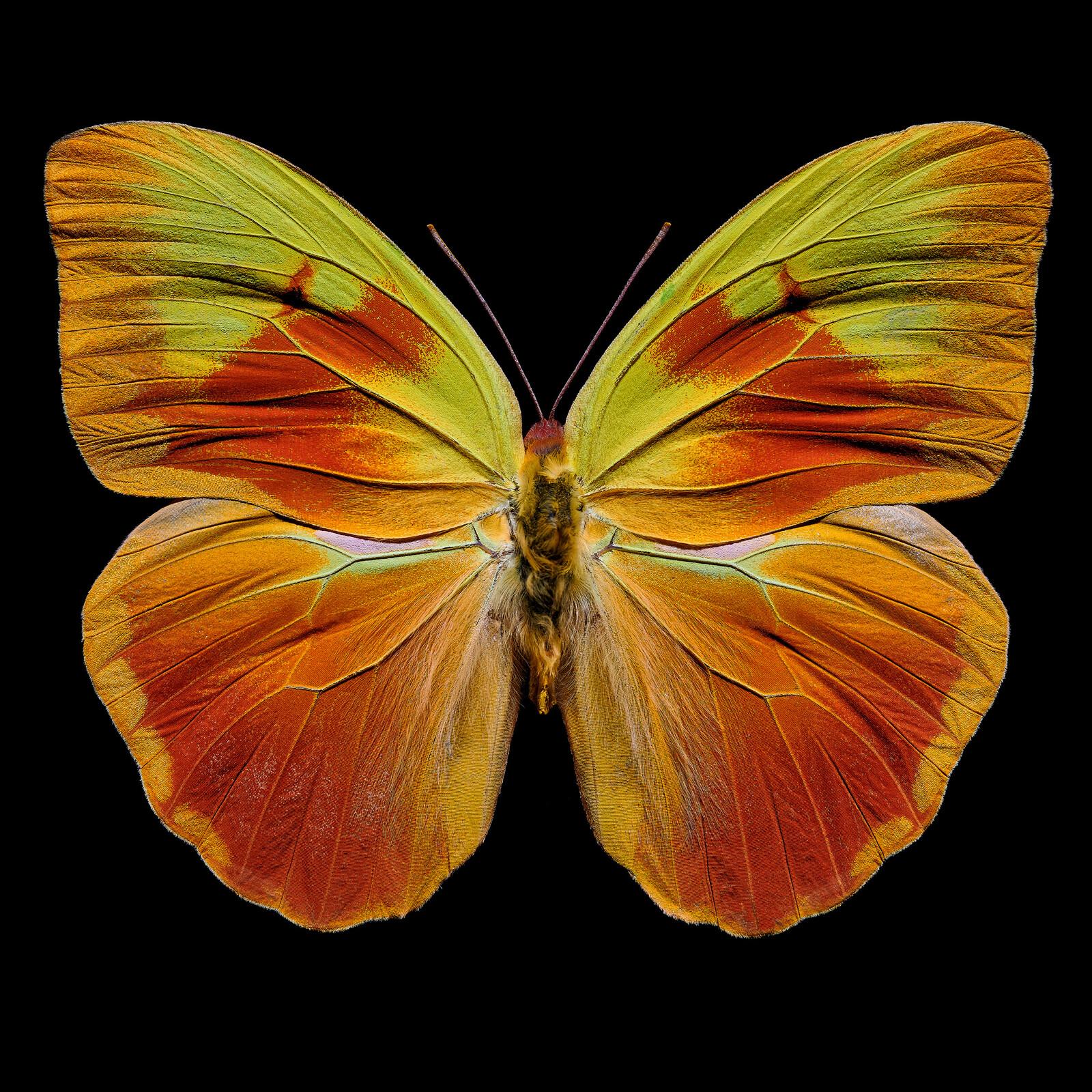 Butterfly  XI - Heiko Hellwig