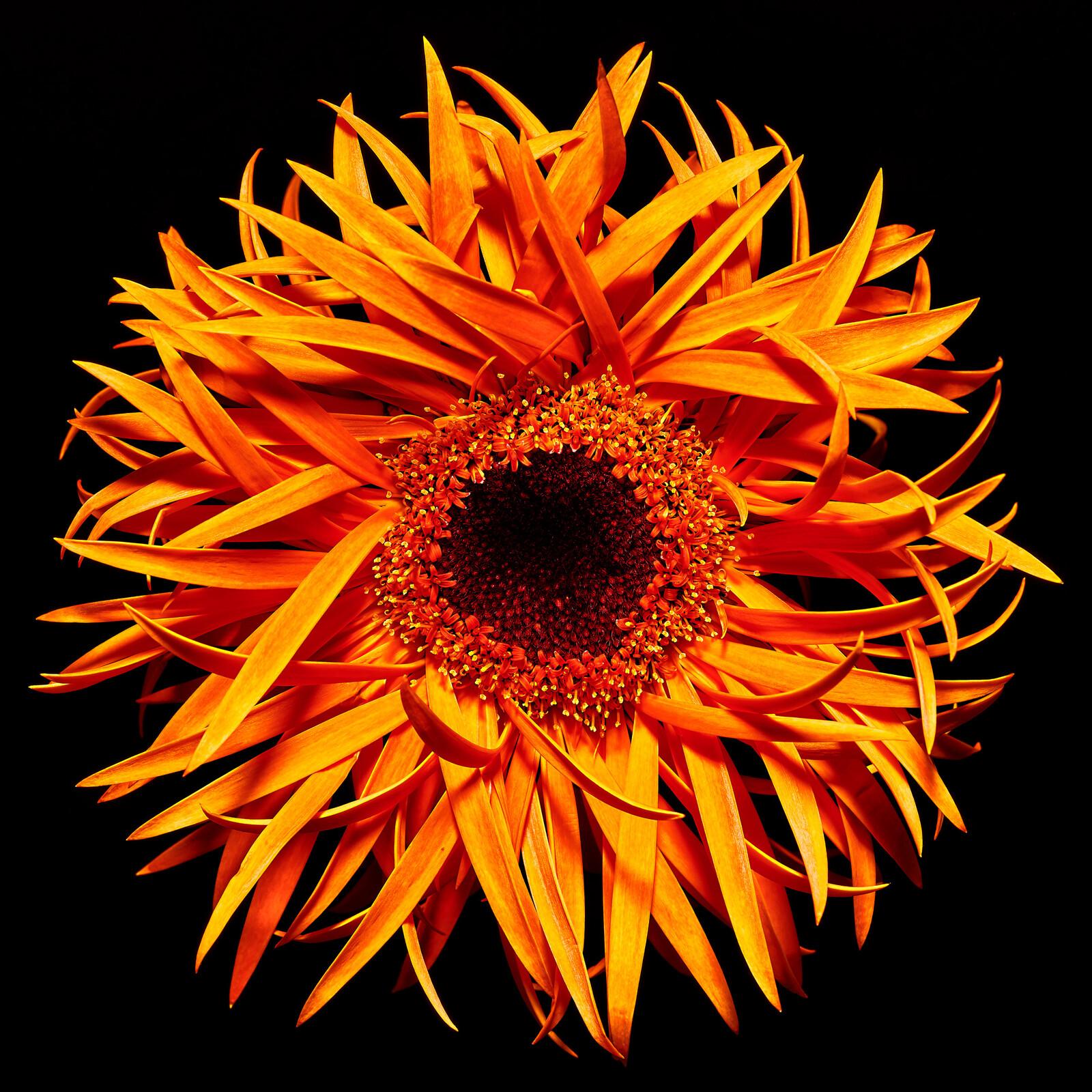 Blossom - Heiko Hellwig