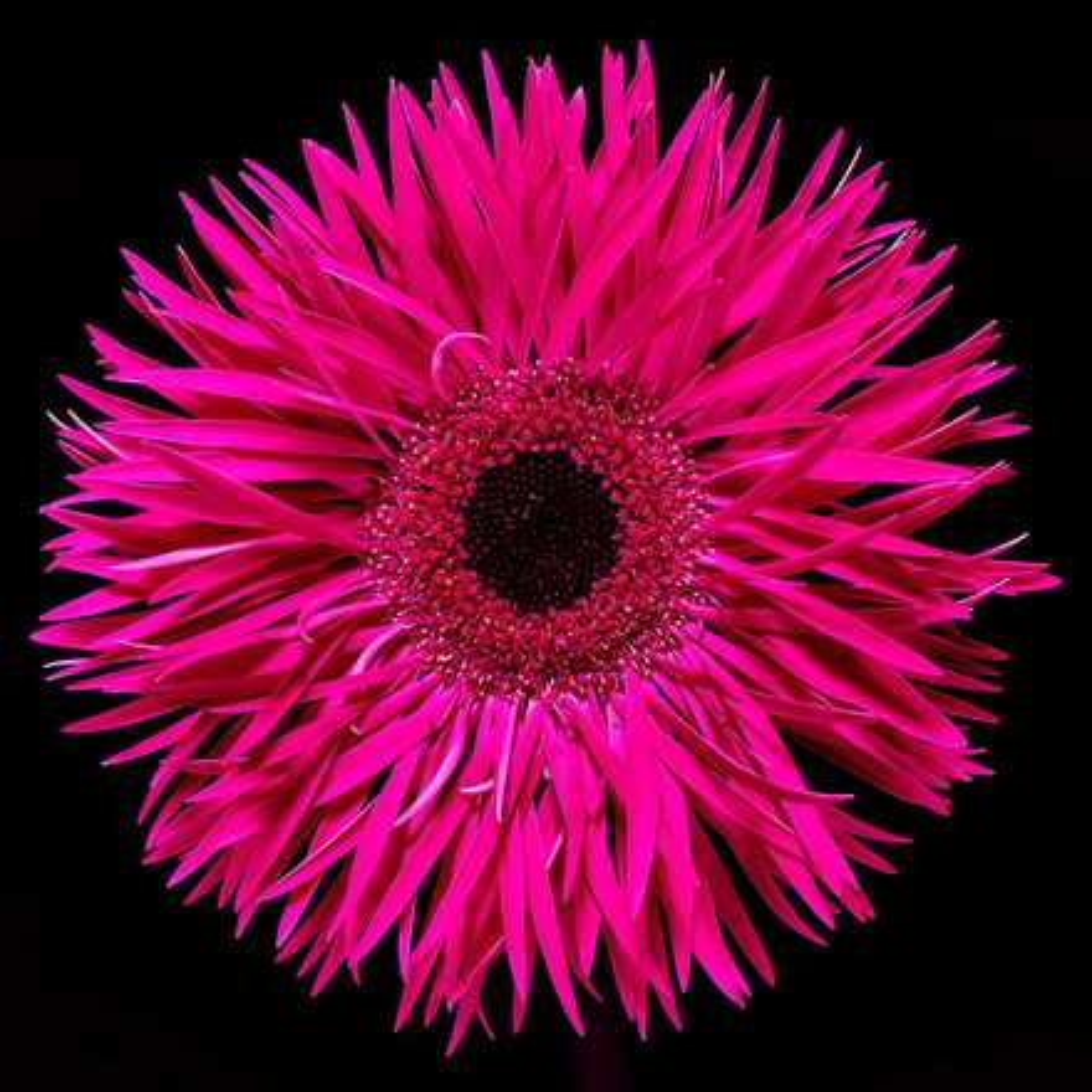 Blossom III - Heiko Hellwig