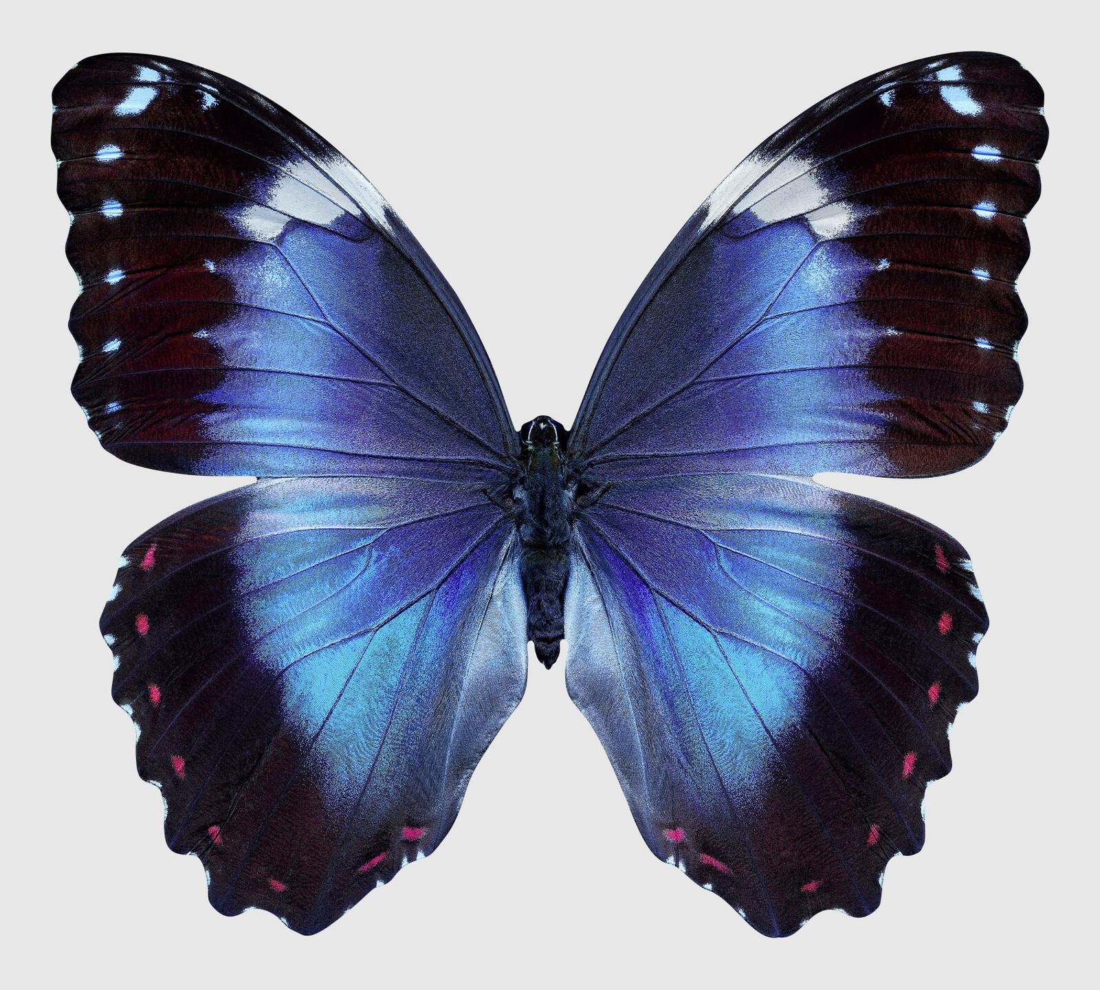 Butterfly XIV - Heiko Hellwig