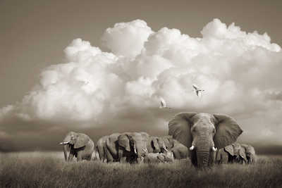 Serengeti Elephants, Tanzania by Horst Klemm