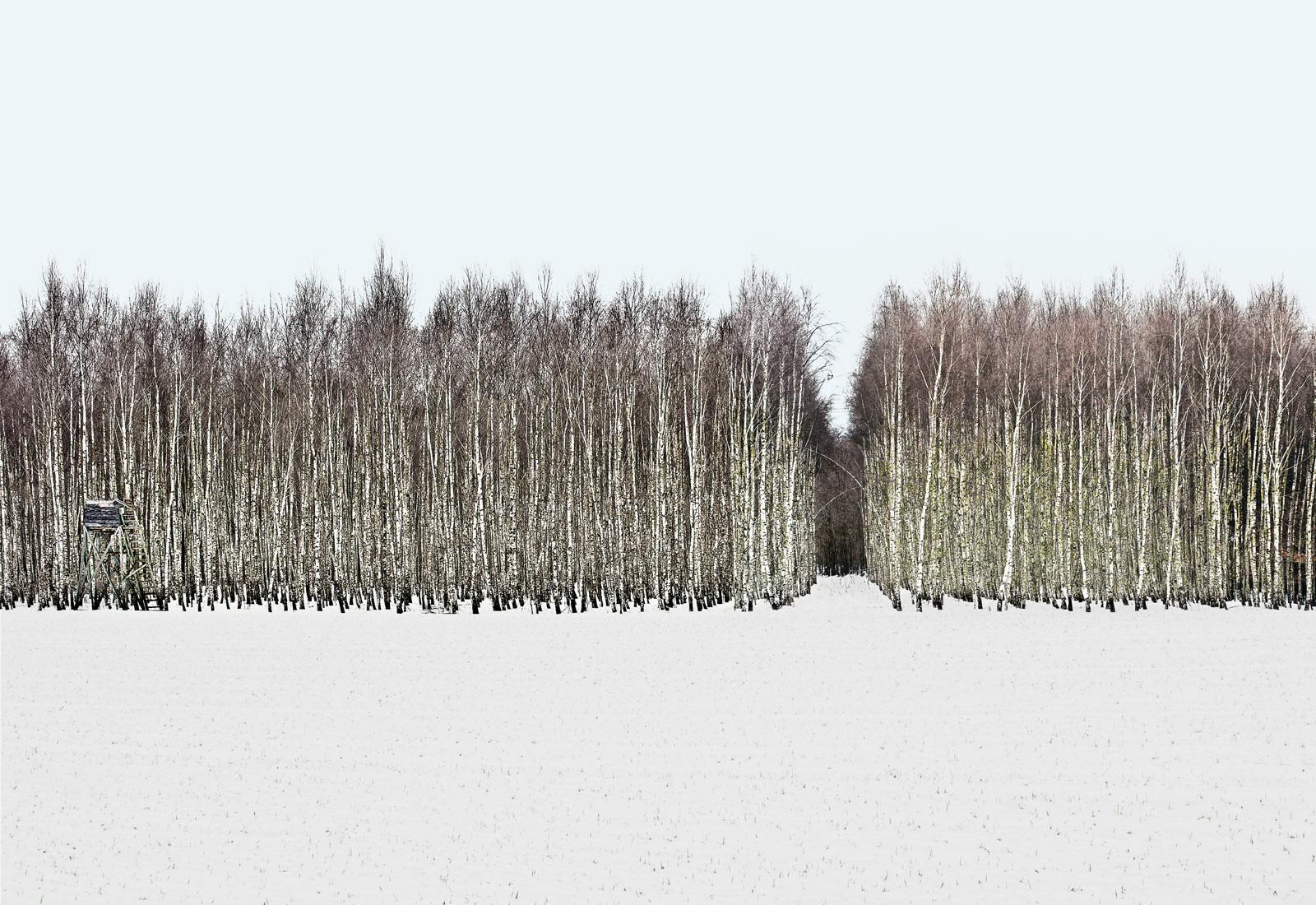 Forest 1 - Hartwig Klappert