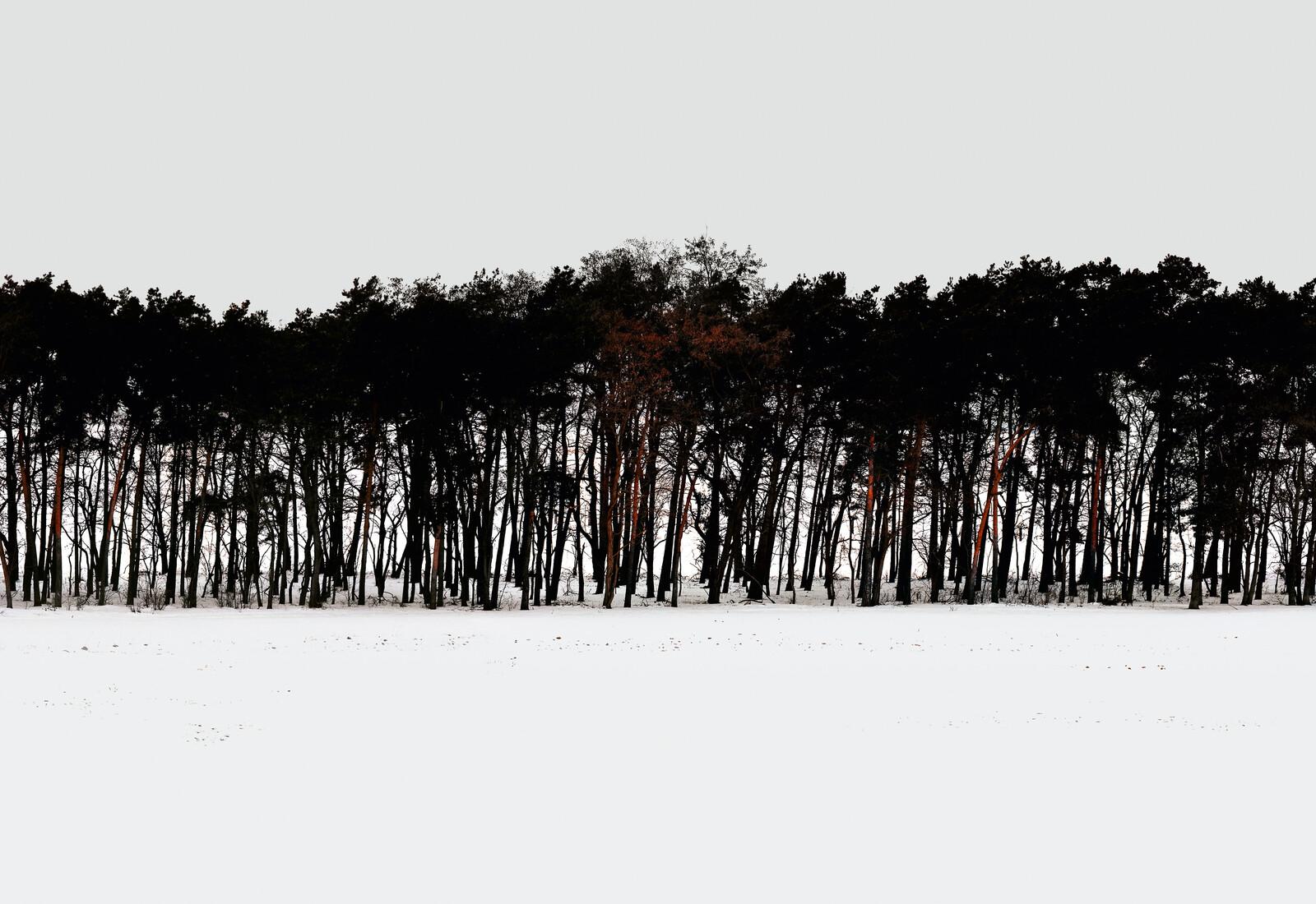Forest 3 - Hartwig Klappert