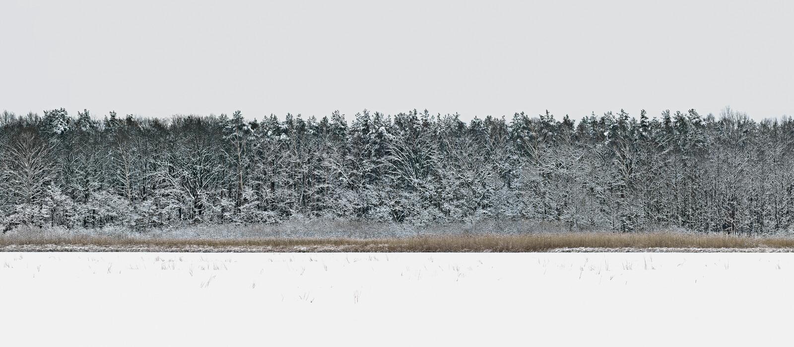Forest 4 - Hartwig Klappert