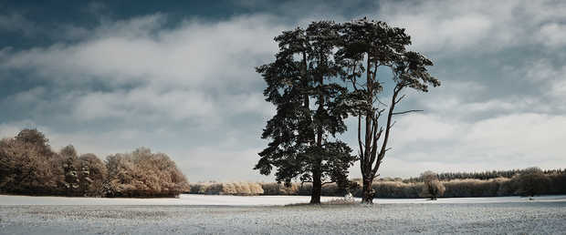 Trees, St Giles Park, Winter View - Justin Barton