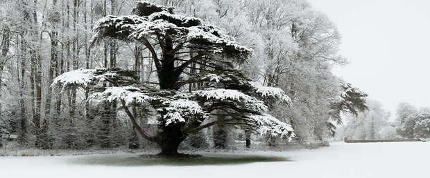 Snow Laden Tree in St Giles House Park - Justin Barton